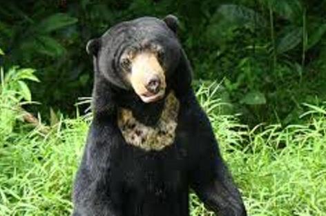 760+ Gambar Binatang Beruang Madu Gratis Terbaik