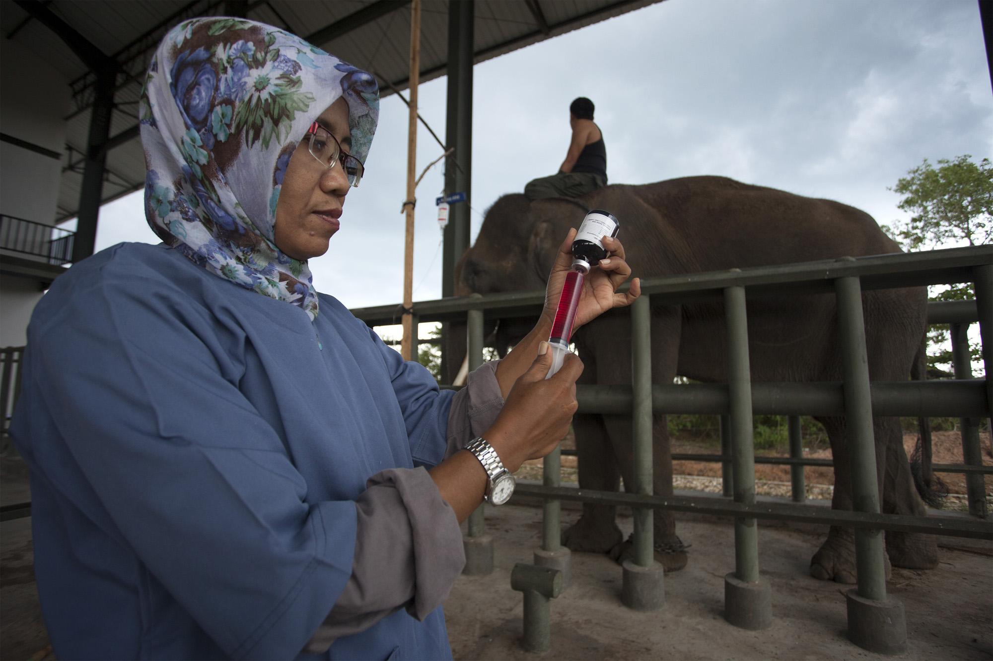 Dokter Menyiapkan Alat Suntik Saat Menanggani Gajah Yang Sakit Di