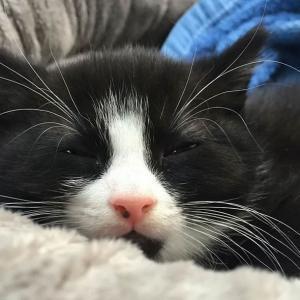 Kucing Lucu Alice 3