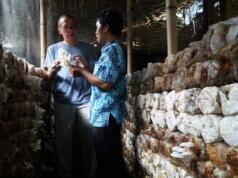 Ketua Pengurus YDBA,Henry C Widjaja (kiri) didampingi Pemilik Difiya Jamur, M.Hadiutama meninjau lokasi pembudidayaan jamur di Lombok,NTB,Jumat(6/10)