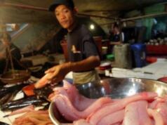 pedagang ikan gabus di pasar tradisional palembang